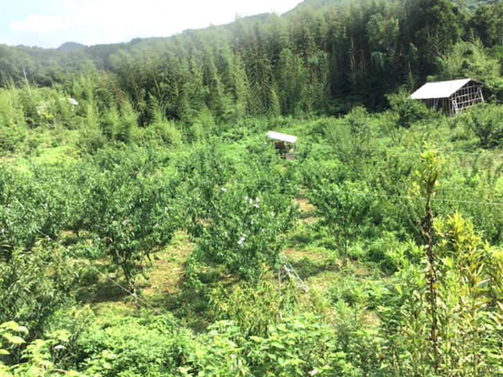 �松さんの農園