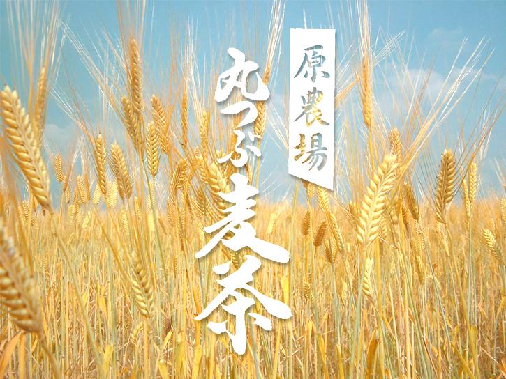 原農場の麦畑