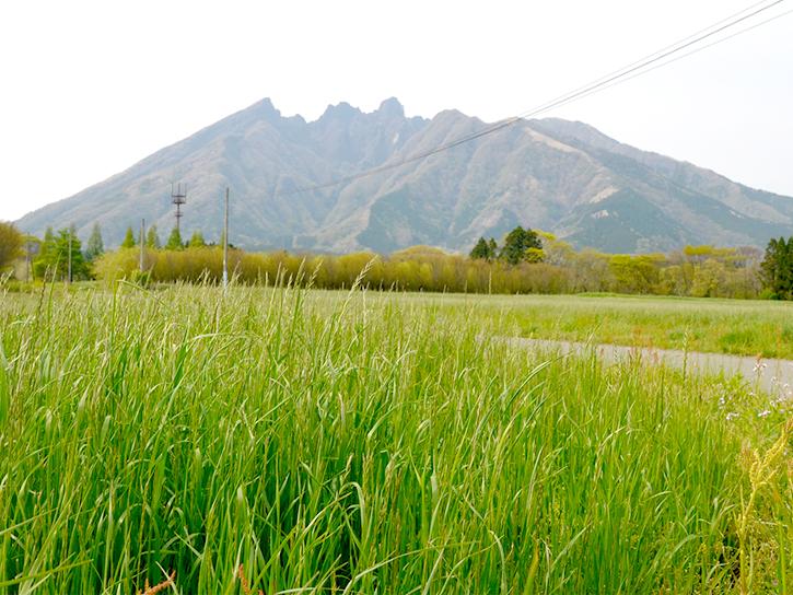 ねこ岳と高森町
