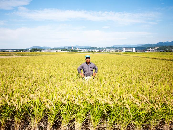 宮川さん自然もち米の圃場