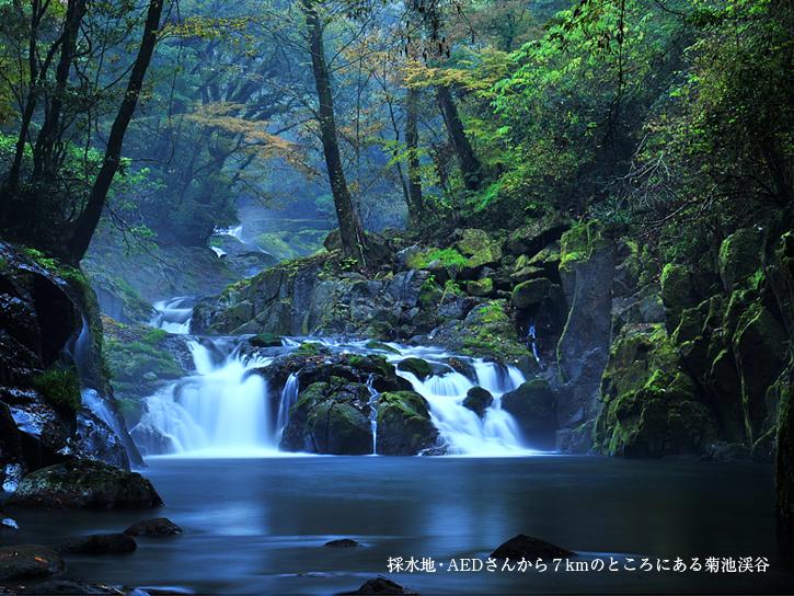 菊池水源の水