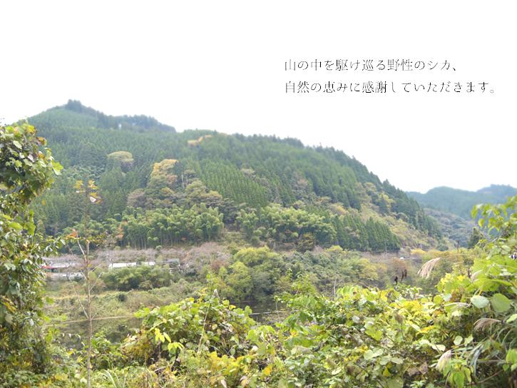 上津江の山の風景