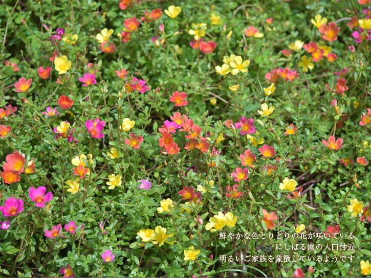 色とりどりの花が咲く、にしばる園の入り口付近