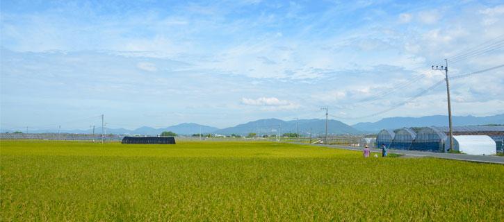 田圃の風景