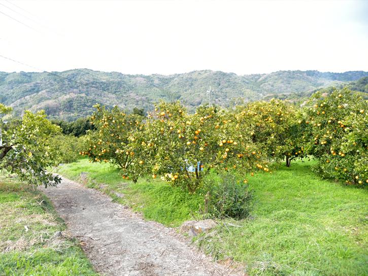 圃場の風景
