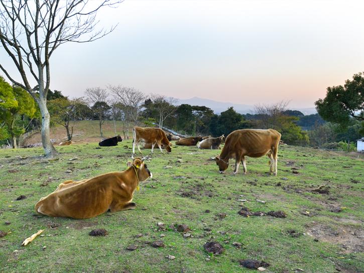 熊本県の玉名牧場