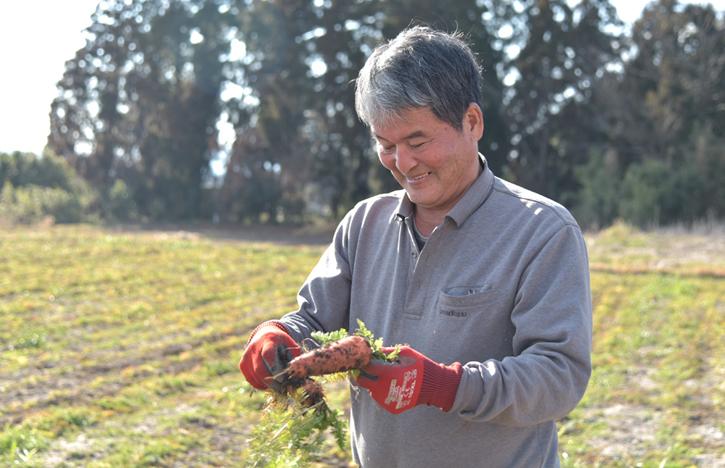冨田さん人参を収穫