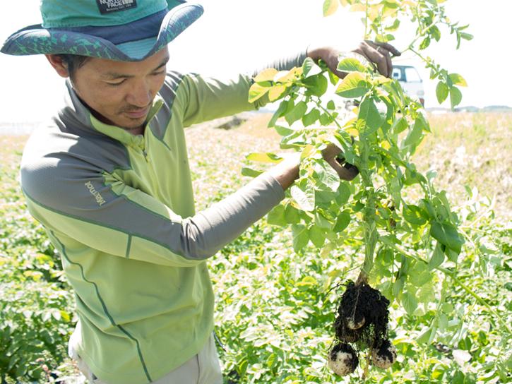 ジャガイモを掘り上げる上野さん