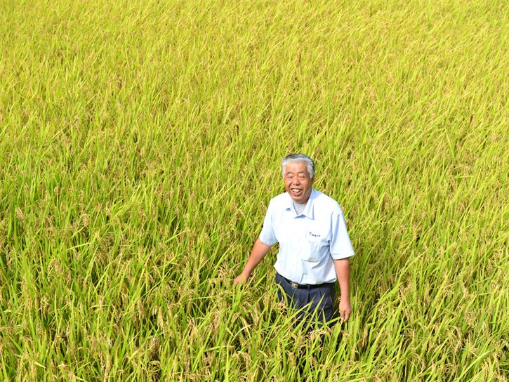 熊本県南阿蘇村、緒方孝行さんの自然栽培の田んぼ