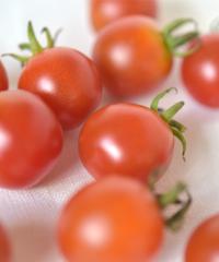 森田さんのミニトマト