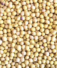 美しい大豆