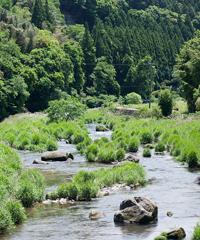 市野瀬付近の川