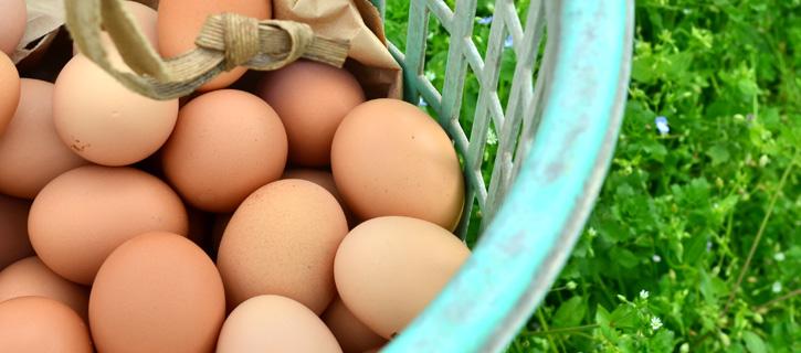 かごに手で集められた有精卵