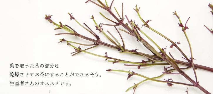 茎はお茶にすることが可能