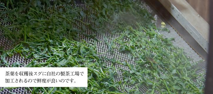 """お茶の工場"""""""