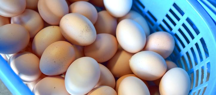 収穫されたばかりの卵