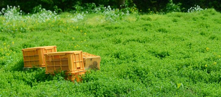 山生苑の敷地の緑