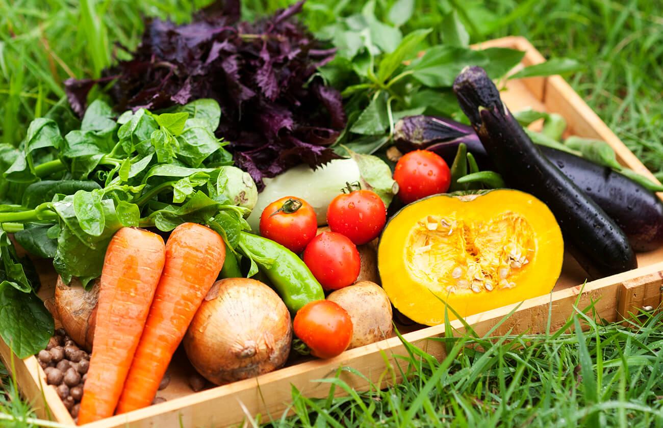 自然栽培の野菜たち