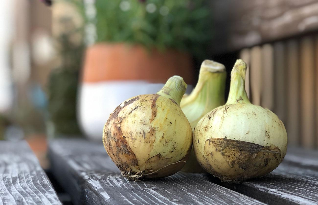きくち村の自然栽培の野菜