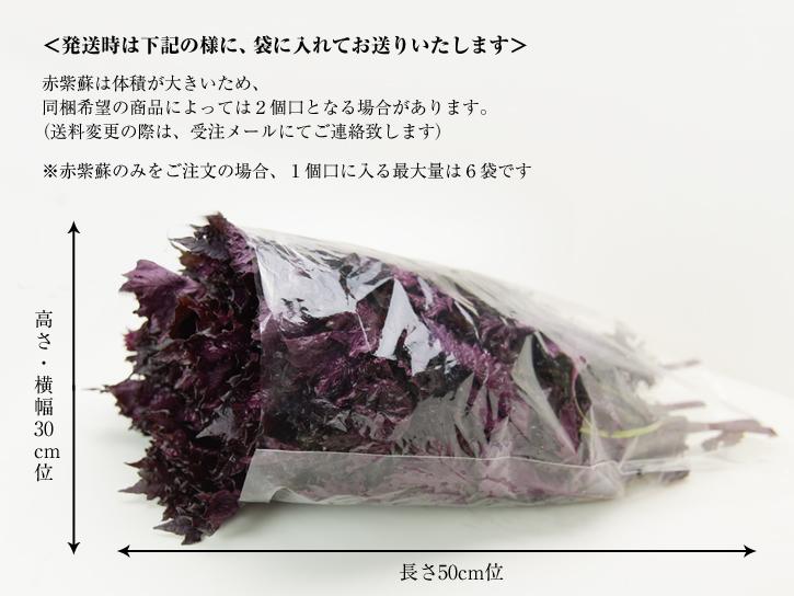 赤紫蘇の大きさ説明