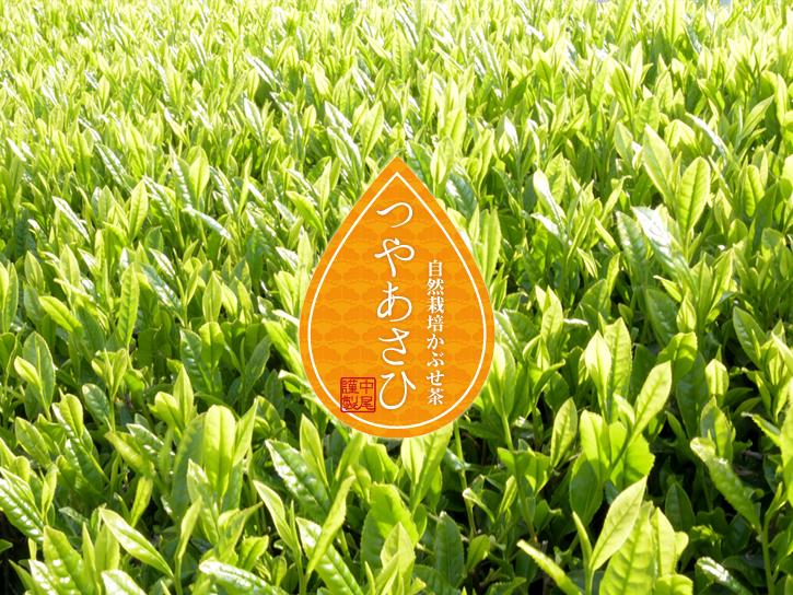 中尾さんの光り輝く茶畑