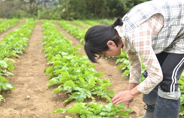 大根の圃場で草取りをする森田さん