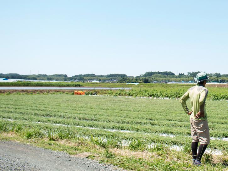上野さんの圃場周辺