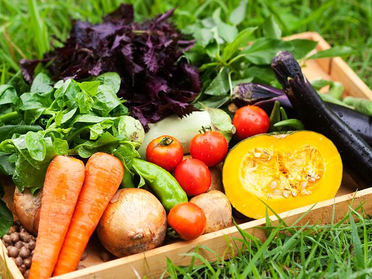 自然派きくちオリジナル野菜セットイメージ