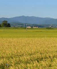 七城町の風景
