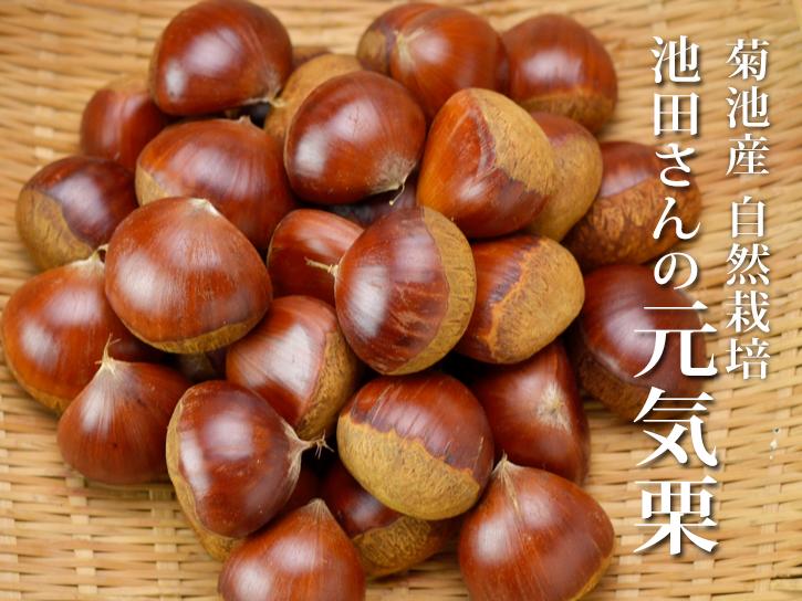 熊本県菊池市の有機農家:池田さんの栗の写真