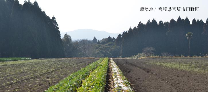 生産地:宮崎県