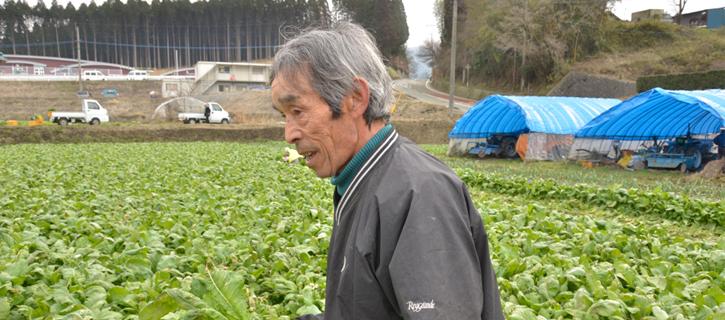 高菜の収穫風景に北野さん